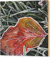 Red Frosty Leaf On Frozen Ground Wood Print