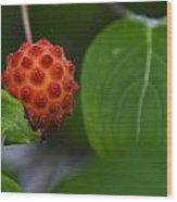 Red Fruit Wood Print