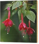 Red Fuchsia Wood Print