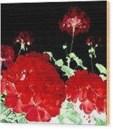 Red Geraniums Wood Print by Will Borden
