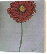 Red Gerbera Wood Print
