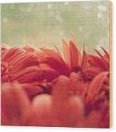Red Gerbera With Green Background Wood Print