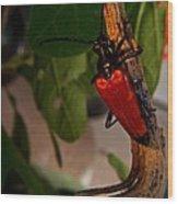 Red Glowing Beetle Wood Print