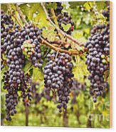 Red Grapes In Vineyard Wood Print