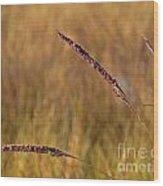 Red Grass Wood Print