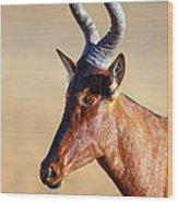Red Hartebeest Portrait Wood Print