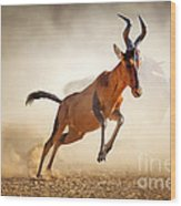 Red Hartebeest Running In Dust Wood Print