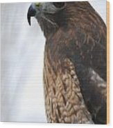 Red Hawk I Wood Print