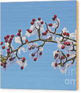 Red Haws Frosted By Snow Wood Print