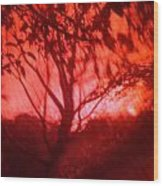 Red Haze Wood Print