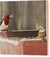 Red-headed Woodpecker Feeding Wood Print
