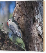 Red Headed Woodpecker Wood Print
