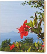 Red Hibiscus Flower Wood Print