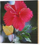 Red Hibiscus Flower Wood Print