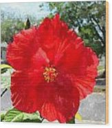 Red Hibiscus In The Neighborhood Wood Print