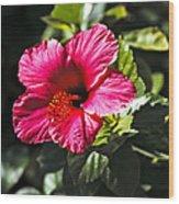 Red Hibiscus Wood Print by Robert Bales