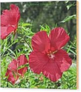 Red Hollyhocks Wood Print
