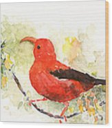 I'iwi - Hawaiian Red Honeycreeper Wood Print