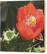 Hot Red Cactus Wood Print