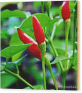 Red Hot.. Chillis Wood Print