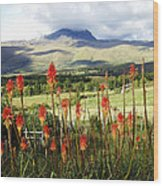 Red Hot Pokers Of The Andes Wood Print