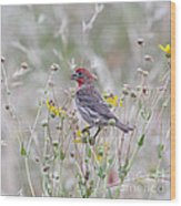 Red House Finch In Flowers Wood Print