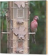 Red House Finch Wood Print
