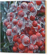 Red Ice Berries Wood Print