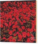 Red Impatiens Flowers Wood Print