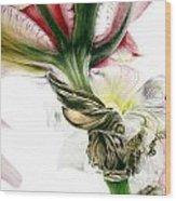 Red Iris Wood Print