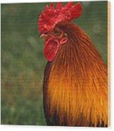 Red Jungle-fowl Wood Print