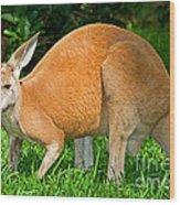 Red Kangaroo Wood Print