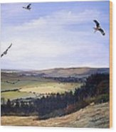 Red Kites At Coombe Hill Wood Print