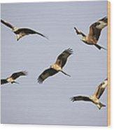 Red Kites Montage Wood Print