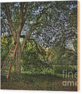 Red Ladder And Oak Wood Print