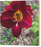Red Lady Lily 1 Wood Print