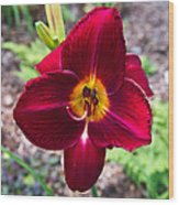 Red Lady Lily 2 Wood Print