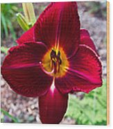 Red Lady Lily 4 Wood Print
