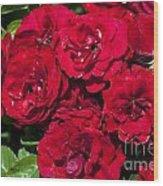 Red Lavaglut Lavaglow Floribunda Roses Wood Print