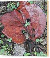 Red Leaf On Green Wood Print