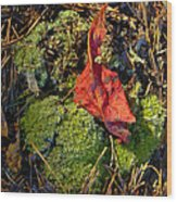Red Leaf On Moss Wood Print