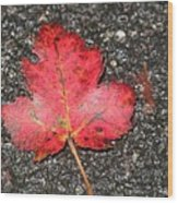 Red Leaf On Pavement Wood Print