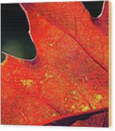 Red Leaf Rising Wood Print