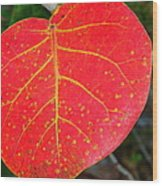 Red Leaf With Yellow Veins Wood Print