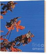 Red Leaves Blue Sky Wood Print