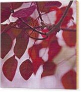 Red Leaves - Euphorbia Cotinifolia - Tropical Smoke Bush Wood Print