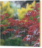 Red  And  Yellow  Leaves  Wood Print