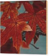 Red Leaves On The Branches In The Autumn Forest. Wood Print