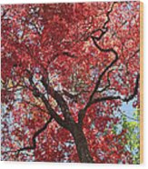 Red Leaves On Tree Wood Print