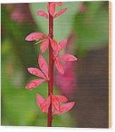 Red Leaves2 Wood Print